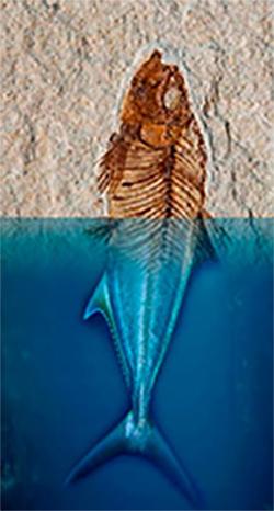 Taller d'iniciació a la identificació de fòssils