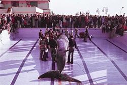 Exposició 'El viatge de la balena de Mataró'