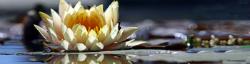 Curso de mindfulness para la regulación de las emociones y el estrés