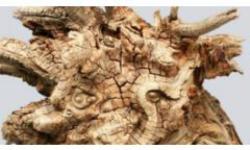 Exposició 'Mitologia i natura. L'ànima de la fusta', Evelí Adam