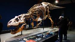 Exposició 'Tyrannosaurus rex'