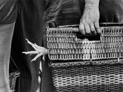 Exposició 'Banyoles, dia de mercat', d'Eugeni Forcano. Fotografia