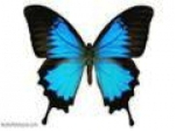 Exposició 'El món de les papallones', de Joan Condal