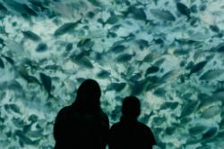 Exposició 'Oceans, l'últim territori salvatge'