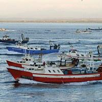 Visites guiades al Port Pesquer i a la subhasta de peix. Font: web de l'Ajuntament de Roses