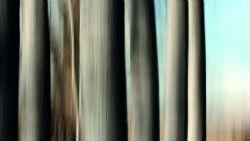 Exposició 'Un somni, un bosc', de Pere Quero