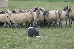 XXVI Concurs de gossos d'atura de Torroella de Montgrí. Font: Ajuntament de Torroella de Montgrí-L'Estartit